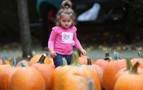 PCC's Pumpkin Fest and Fun Run signal Halloween in Pelham with races and sale of future jack-o'-lanterns