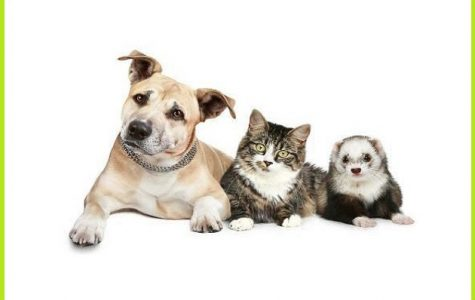 County offers free rabies vaccinations April 28 at New Rochelle's Stamen Animal Hospital